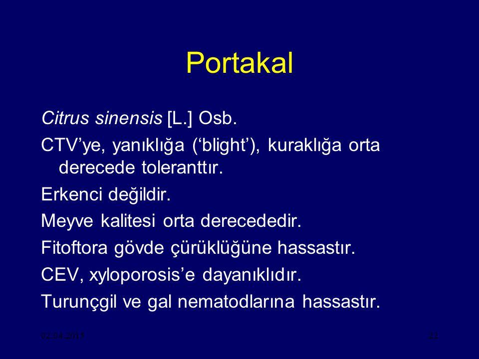 Portakal Citrus sinensis [L.] Osb.